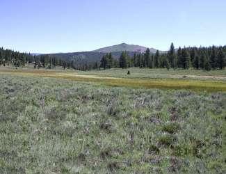 Juniper Hills / Juniper Creek Ranches