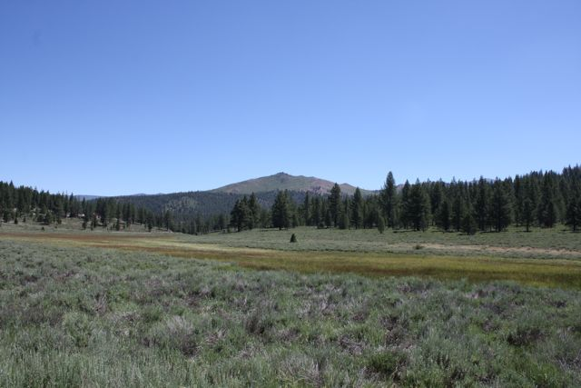 Juniper-creek-meadow