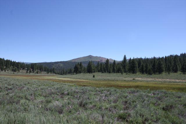 Juniper-creek-meadow