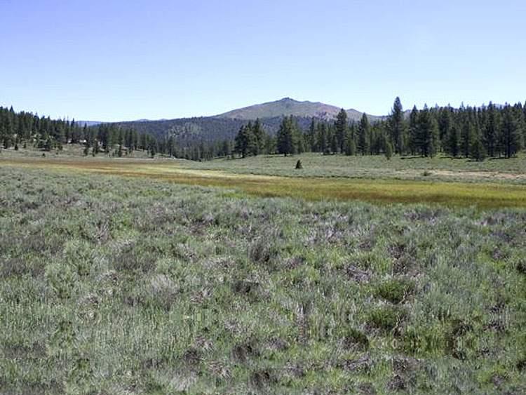 juniper-hills
