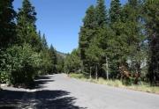 mckinney-tahoe-homes